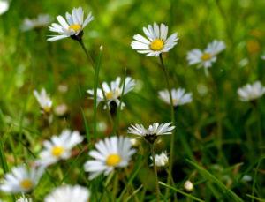 Blütenbild